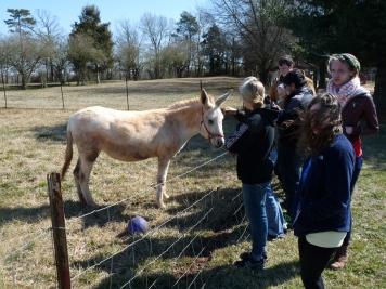 Donkeys on the Sisters Farm